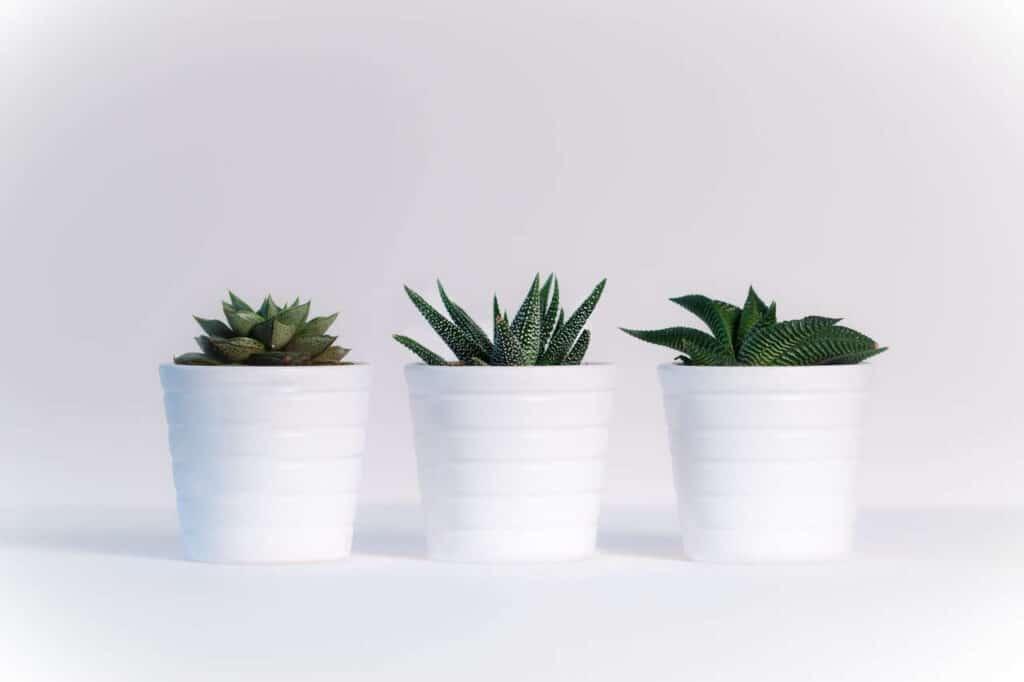 Les 4 types de cactus pour débutants